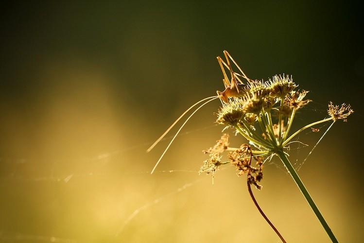 découvrez la nature et le calme environnant